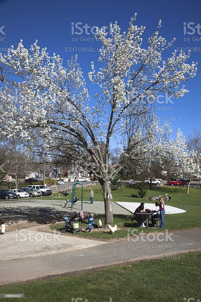 Early Spring in California royalty-free stock photo