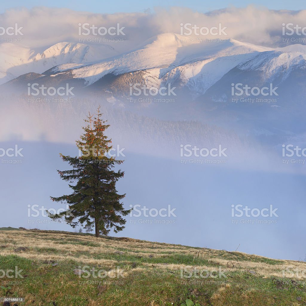 Early spring in the mountains. stock photo