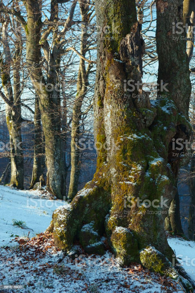 early spring in the mountains stock photo