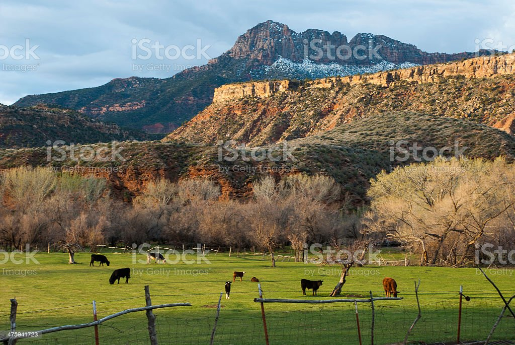 Early Spring Morning and Green Cattle Pastures Rockville Utah royalty-free stock photo
