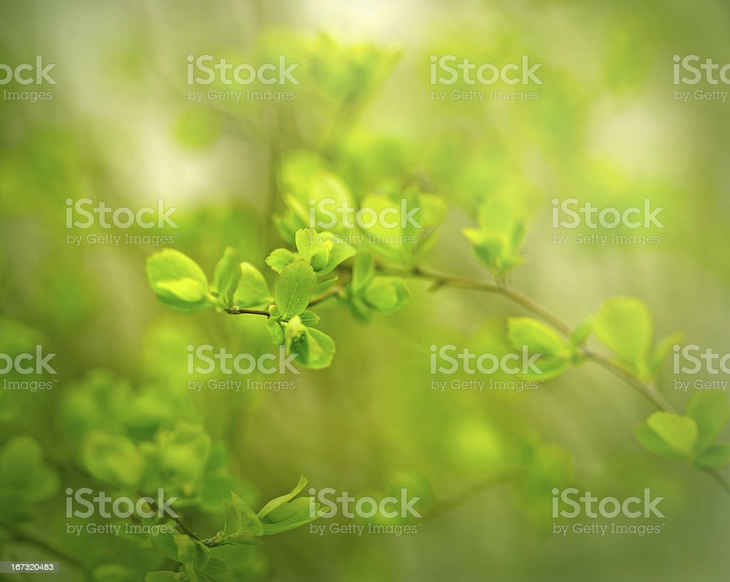 Early Spring - vegetation started royalty-free stock photo