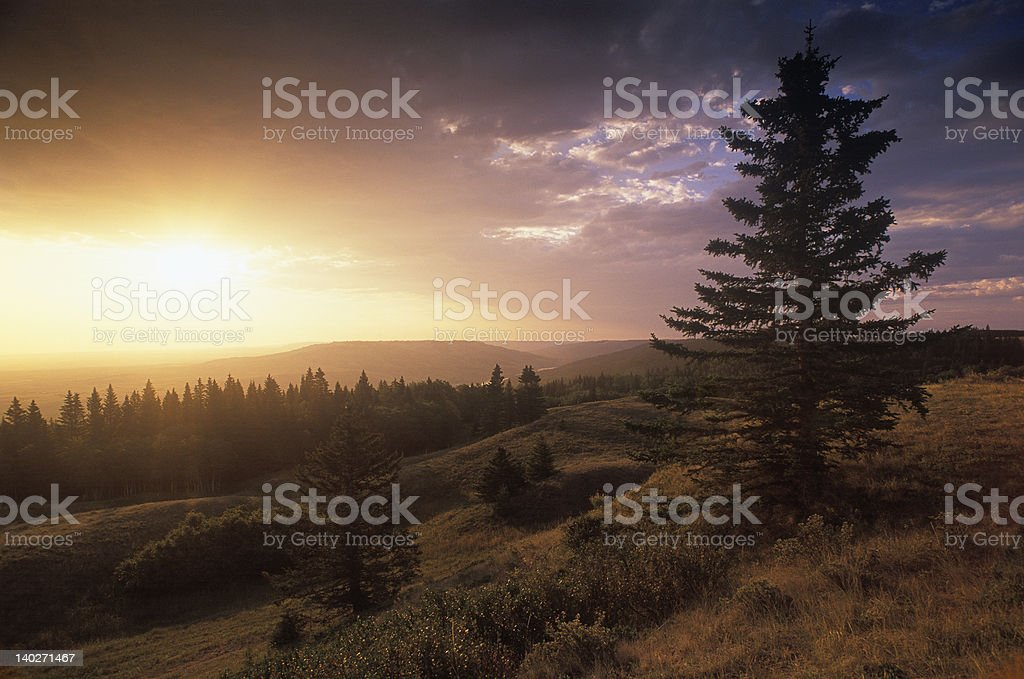 Early Summer Morning (Hi-Res) royalty-free stock photo