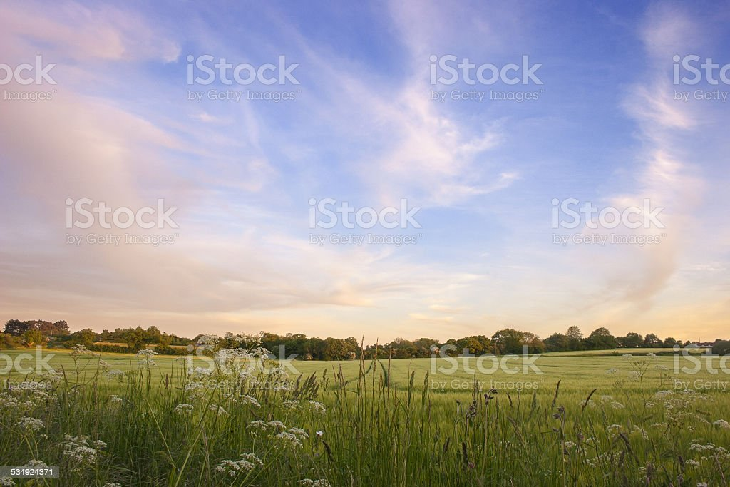 Early summer sunset over barley field, Suffolk stock photo