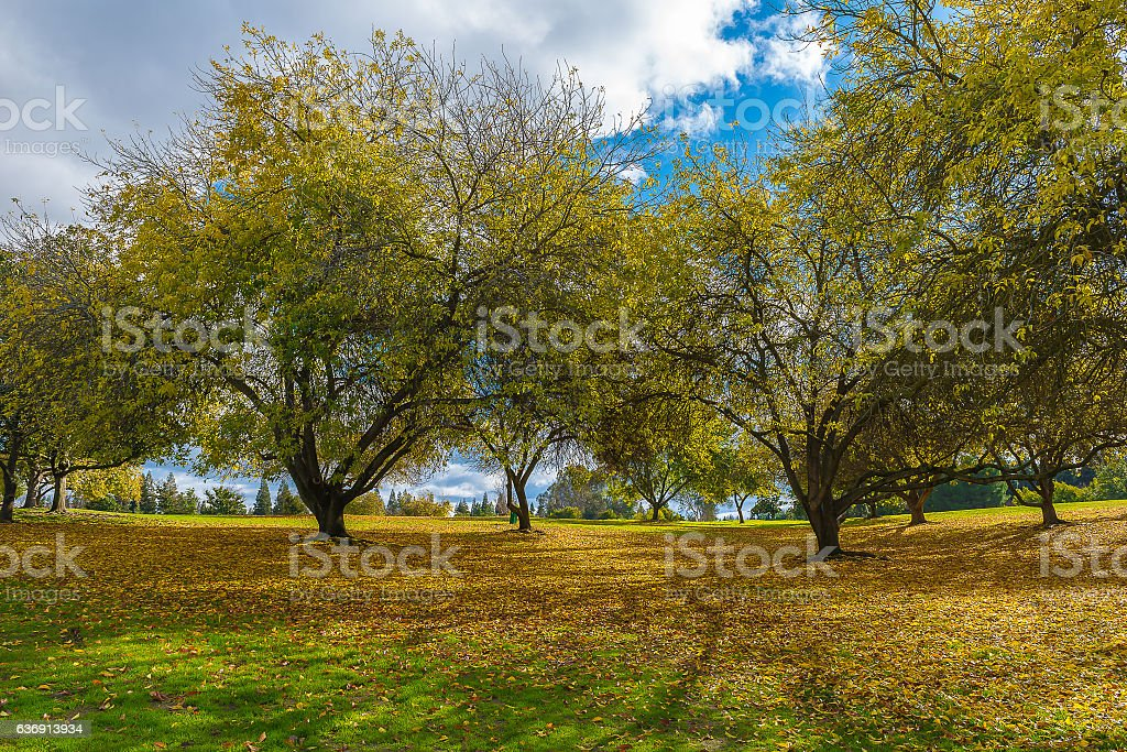 Early Winter landscape in the park in California stock photo