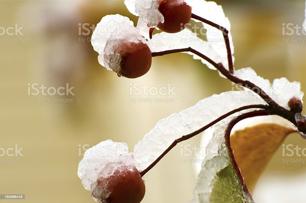 Early Winter royalty-free stock photo