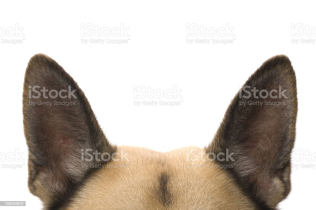 Ears listening stock photo