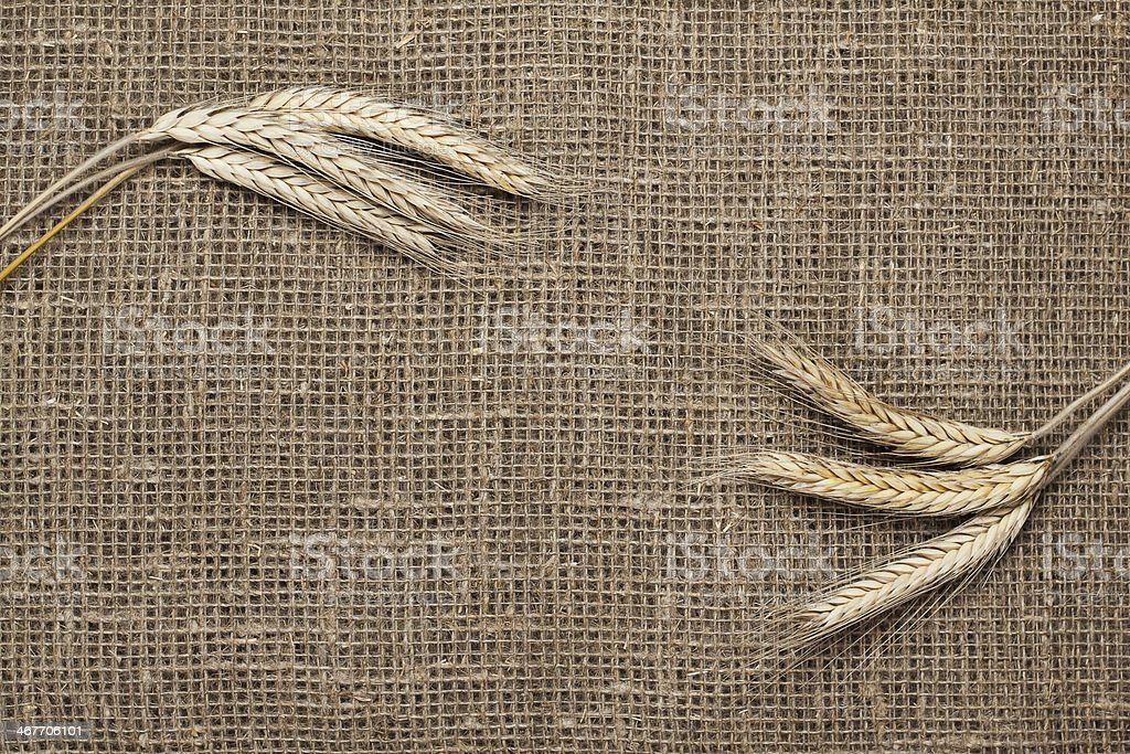 ears of rye on sacking background royalty-free stock photo