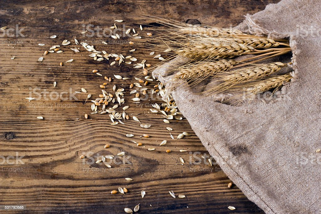 Ears of wheat and scattered grain stock photo