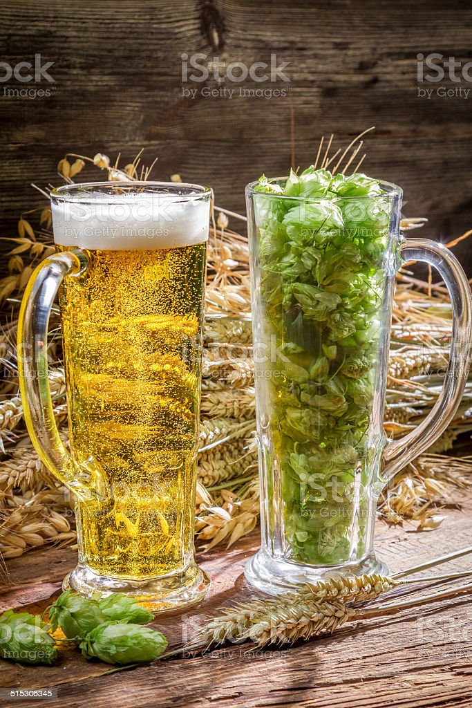Ears of wheat in gold surrounded by fresh beer hops stock photo