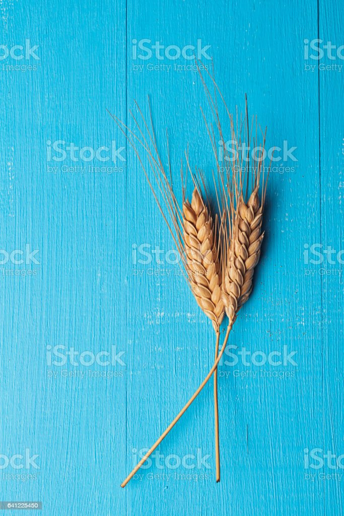 Ears of wheat on blue wooden table stock photo