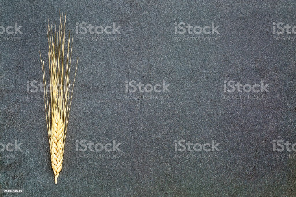 ears of wheat on slate stone stock photo