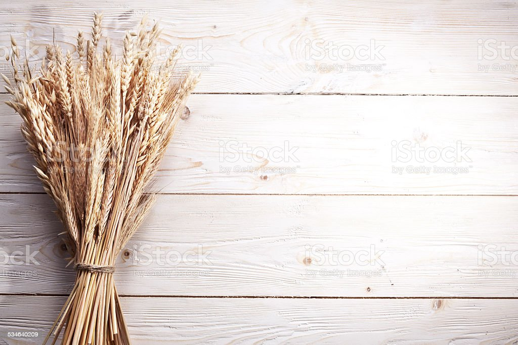 Ears of wheat . stock photo