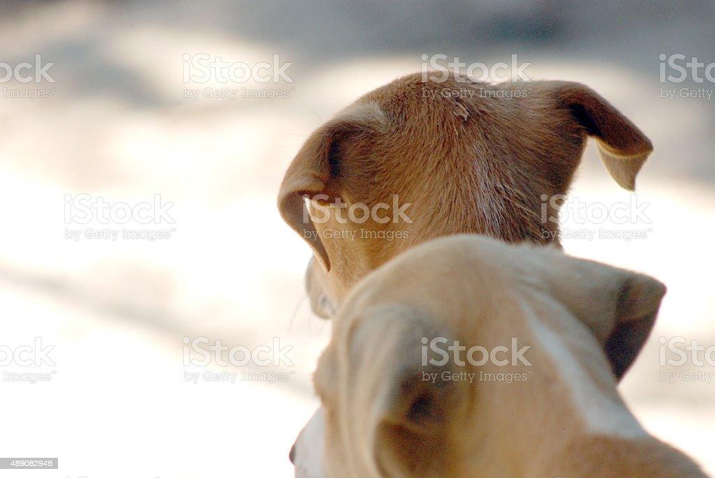 Ears.  Pet and animal theme stock photo