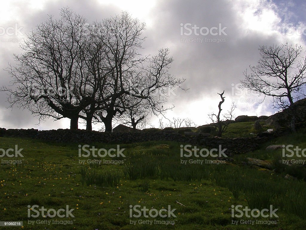 Earth connected to the sky by trees. royalty-free stock photo