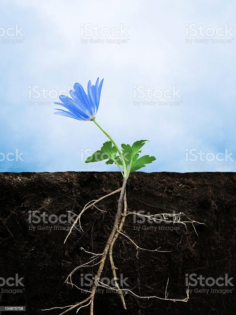 Earth growing flower stock photo