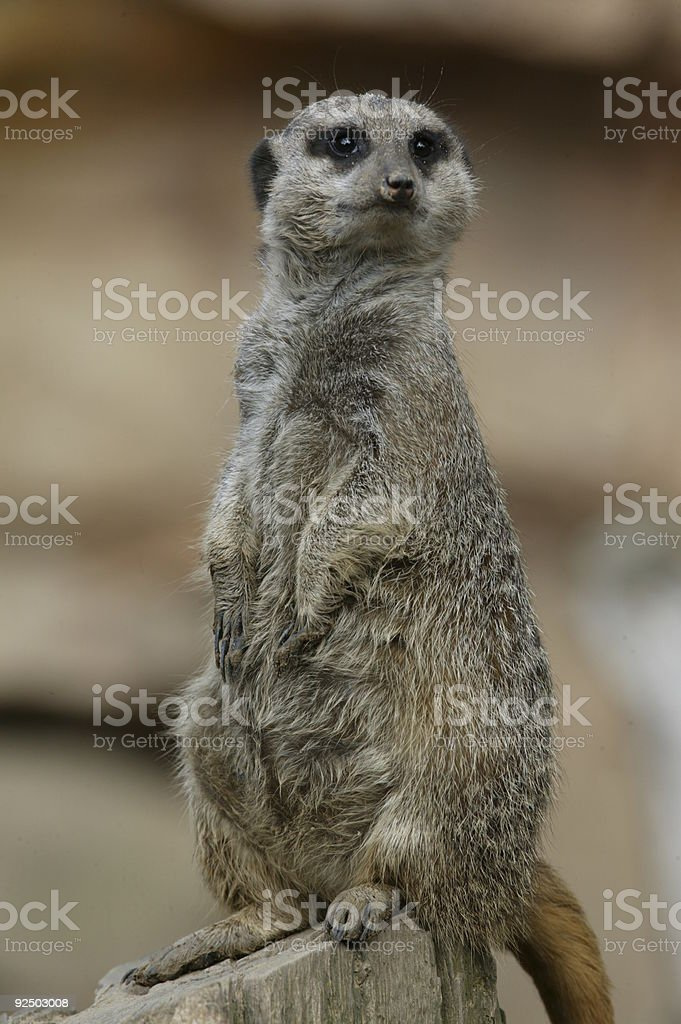 Earth male looking for enemies royalty-free stock photo
