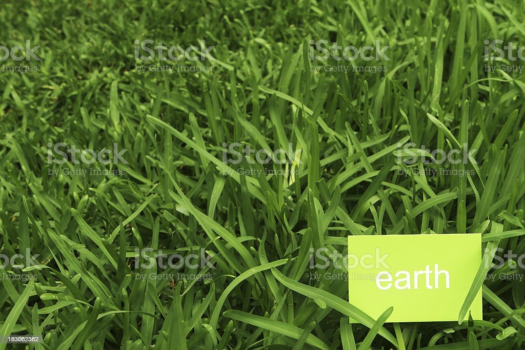 Earth on Business Card in grass stock photo