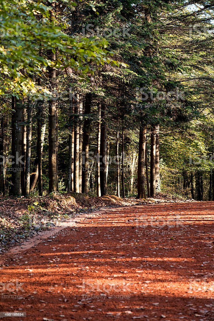 Earth Road Near the Forest stock photo