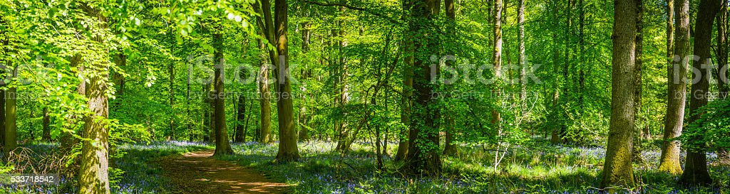 Earth trail through idyllic green forest summer woodland wildflower panorama stock photo