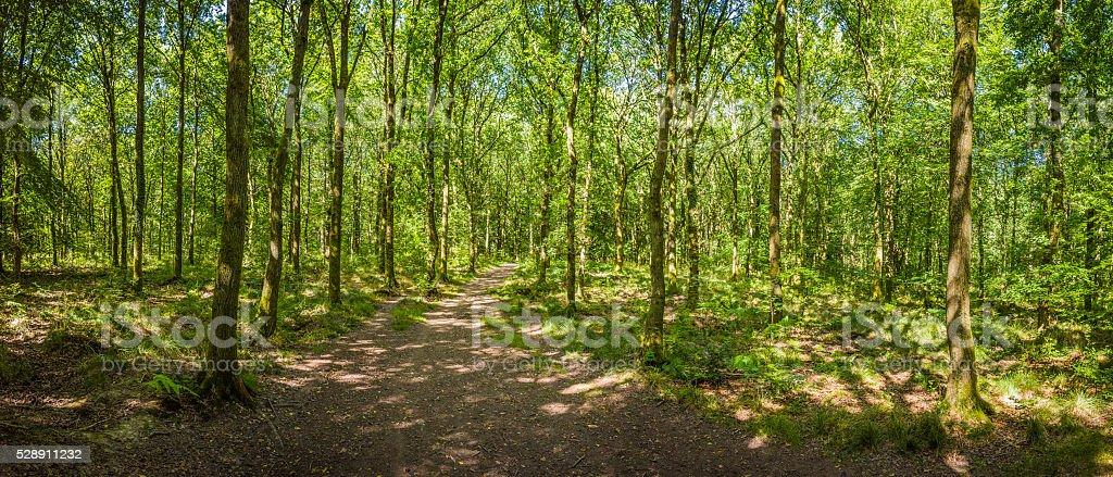 Earth trail through idyllic green summer forest foliage woodland panorama stock photo