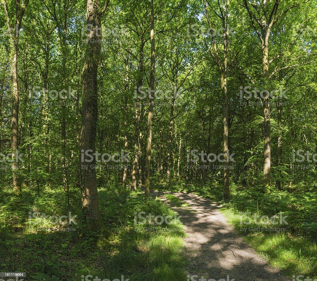 Earth trail through idyllic green summer forest wild oak woodland royalty-free stock photo