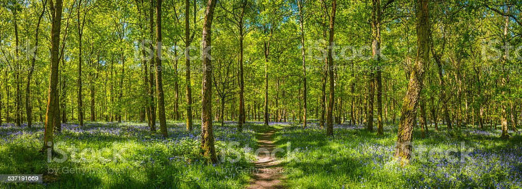 Earth trail through idyllic spring forest leafy green woodland panorama stock photo