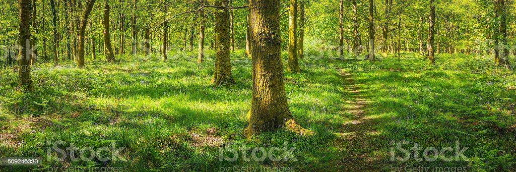 Earth trail through idyllic wild woodland glade green forest panorama stock photo