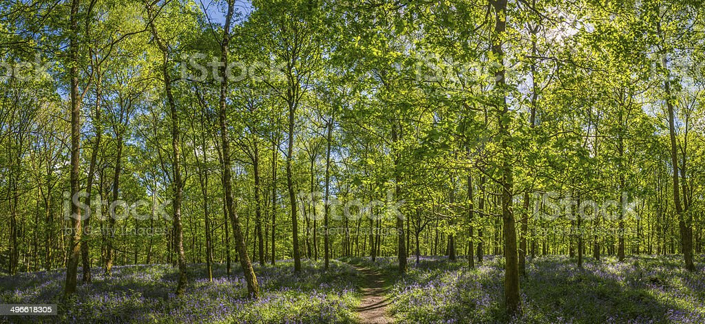 Earth trail through sunlit woodland idyllic summer forest canopy panorama stock photo