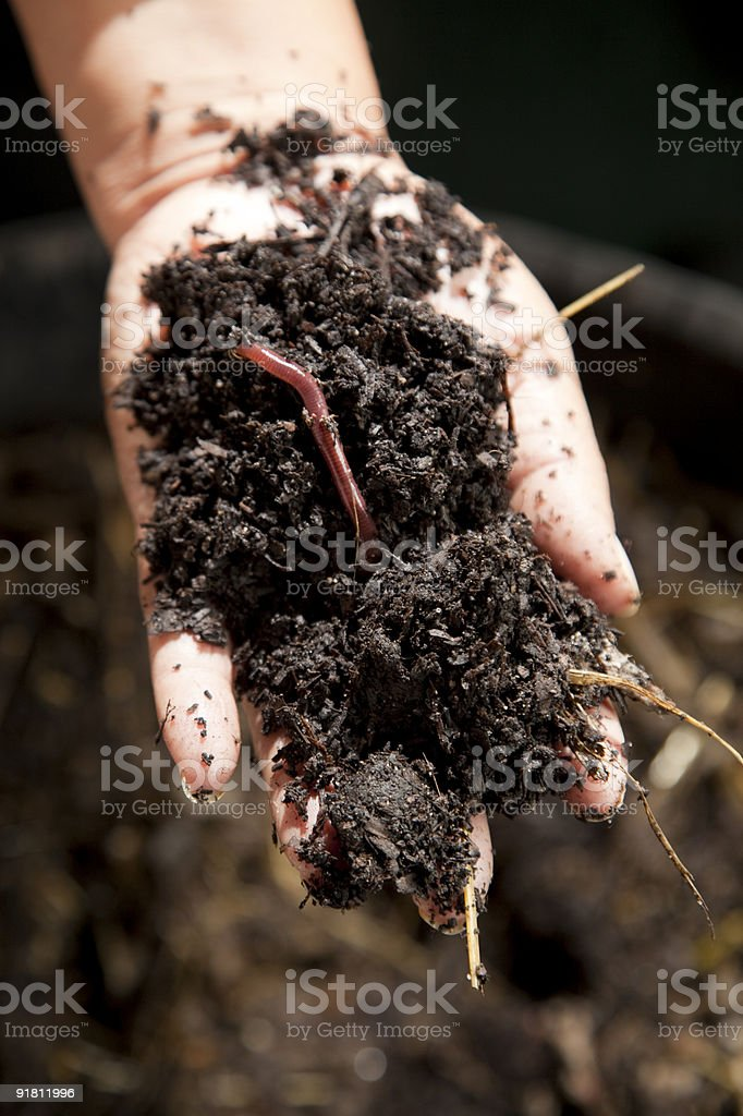 Earthworm and compost in hand stock photo