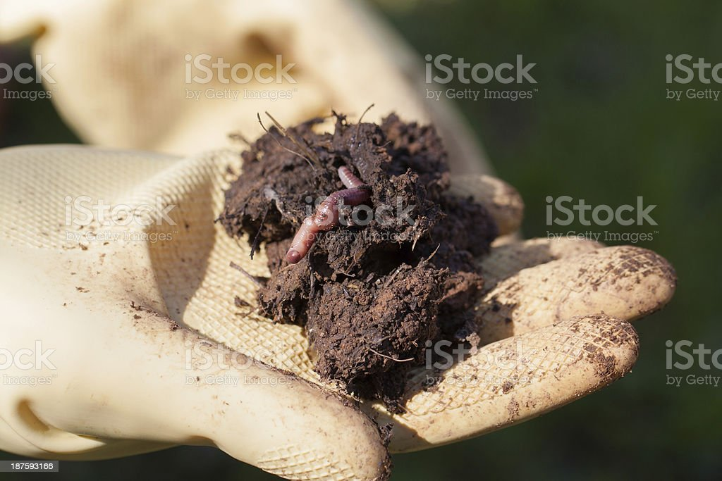 Earthworm In The Soil stock photo