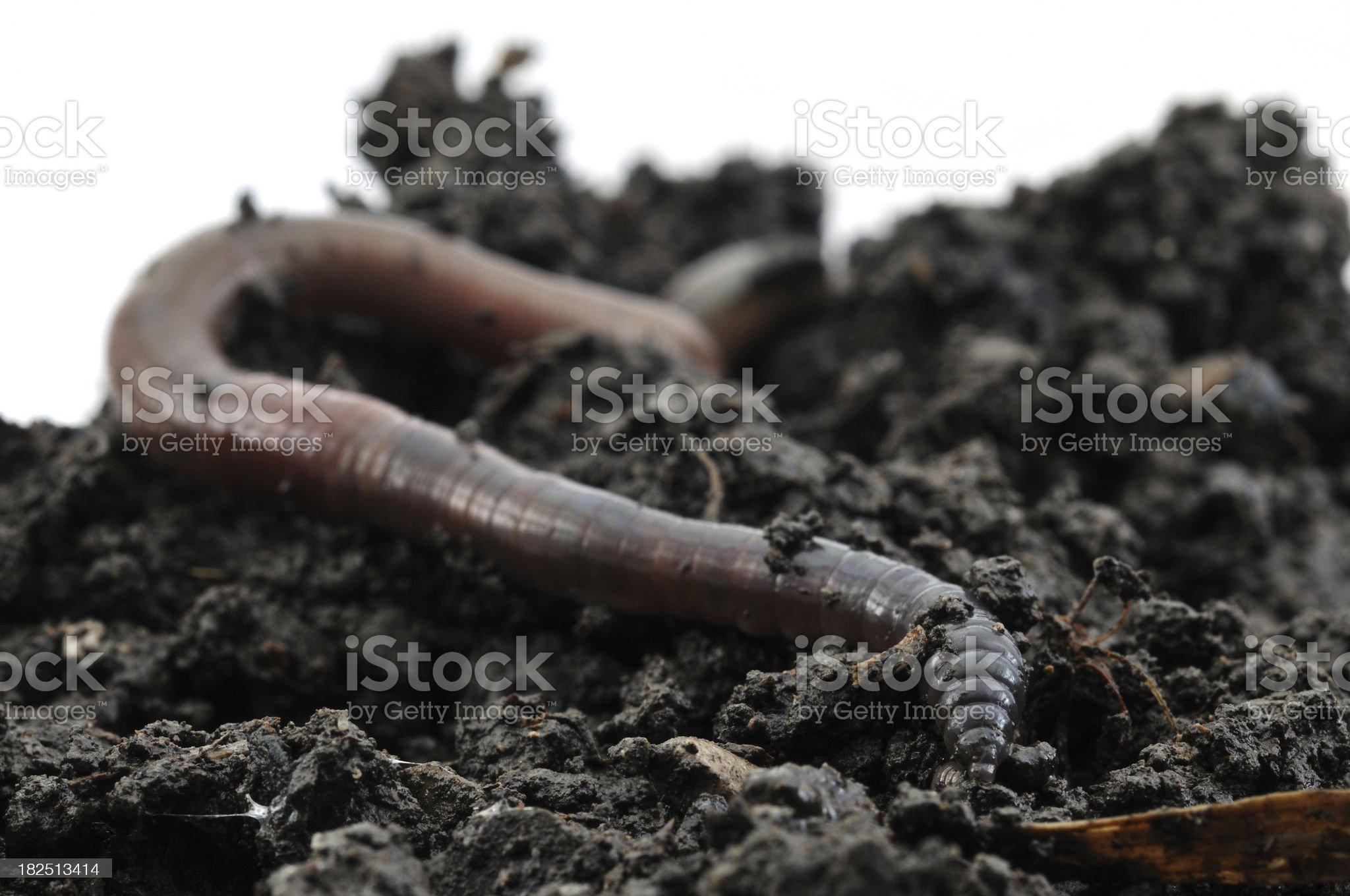 Earthworm on soil royalty-free stock photo