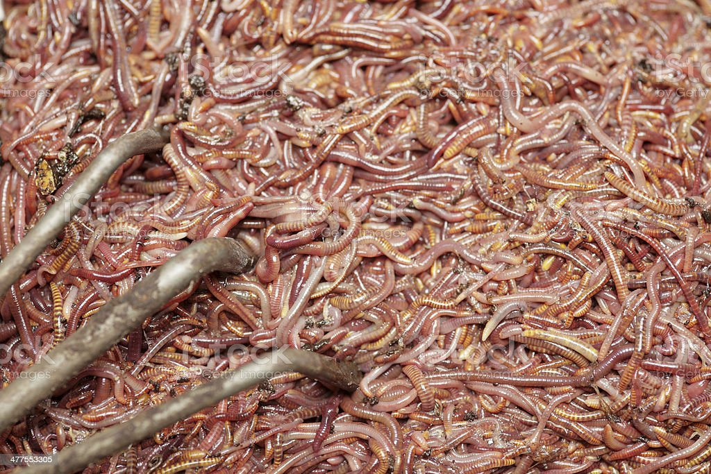 Earthworm royalty-free stock photo