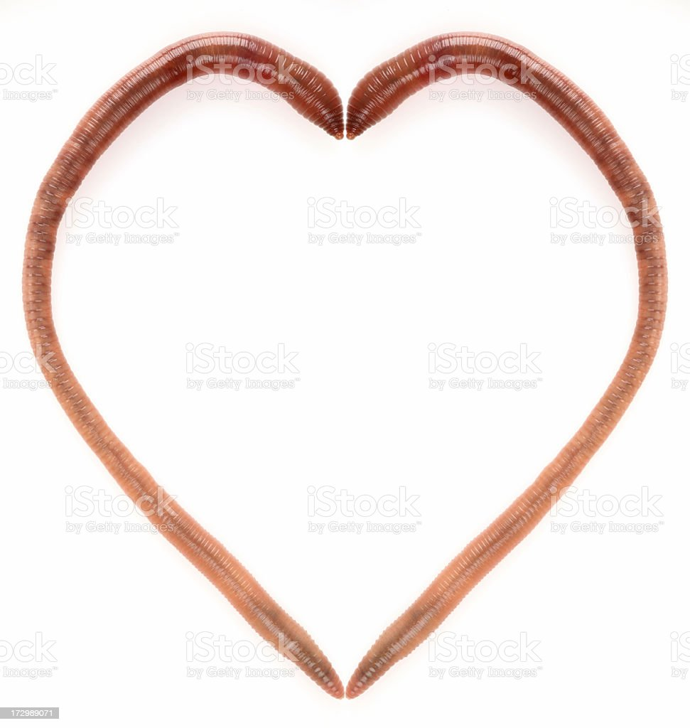 earthworm's heart royalty-free stock photo