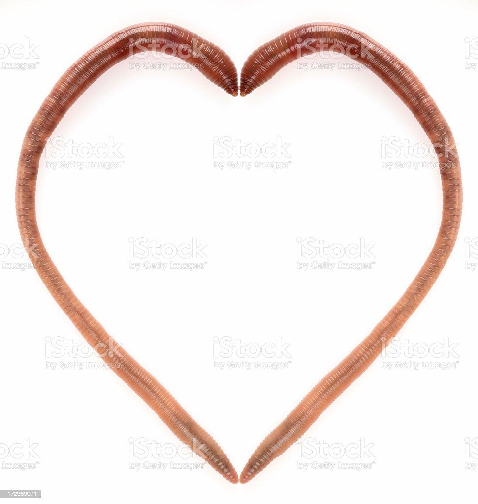 earthworm's heart stock photo