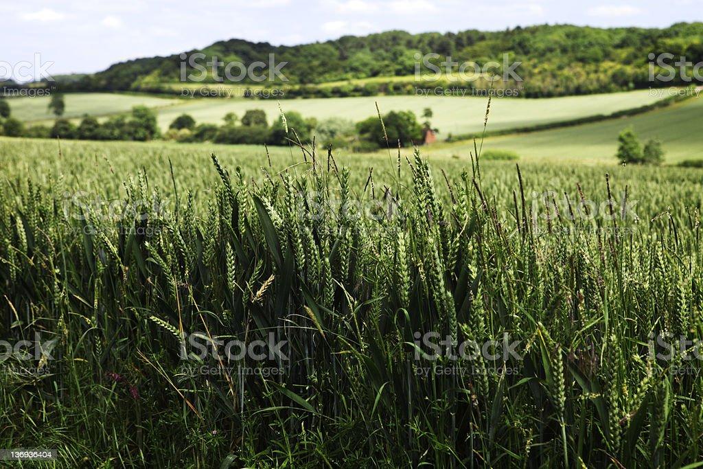 East Anglia Arable Fields stock photo