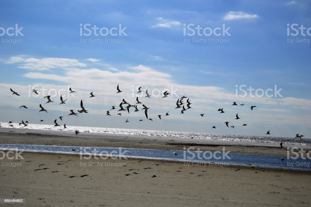 East Beach Shore Birds St. Simons Island stock photo