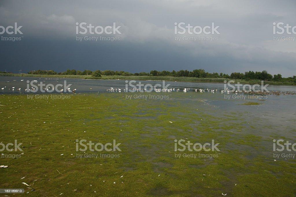 East Pond, Jamaica Bay stock photo