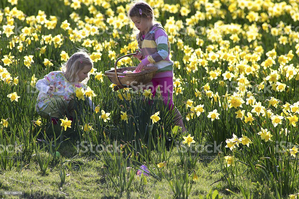 Easter and Daffodiles stock photo