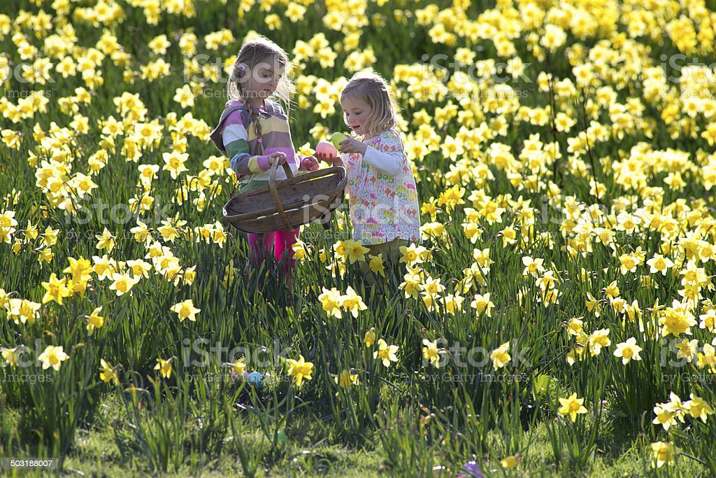 Easter and Field of Daffodiles stock photo