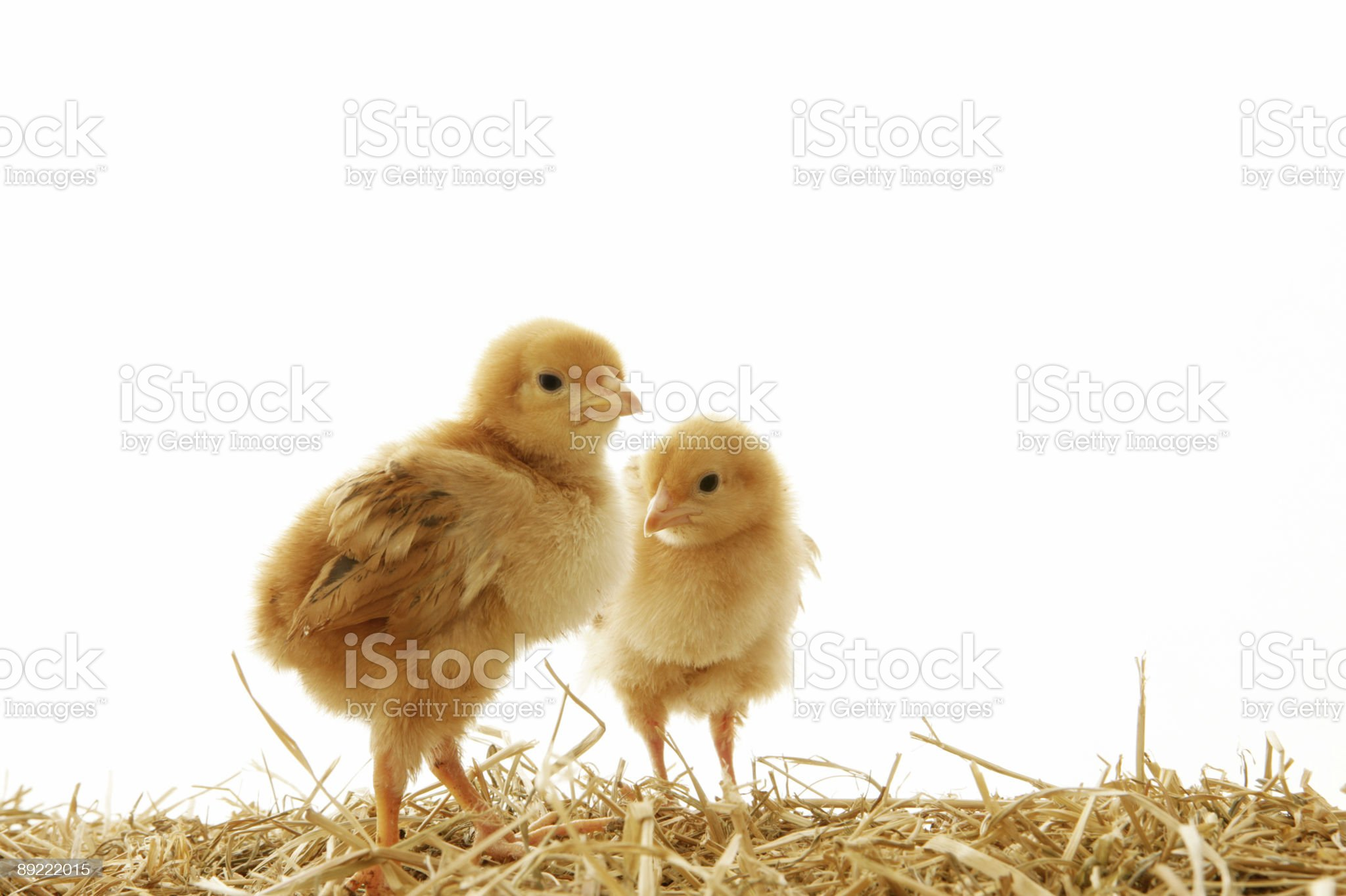 Easter Babies royalty-free stock photo
