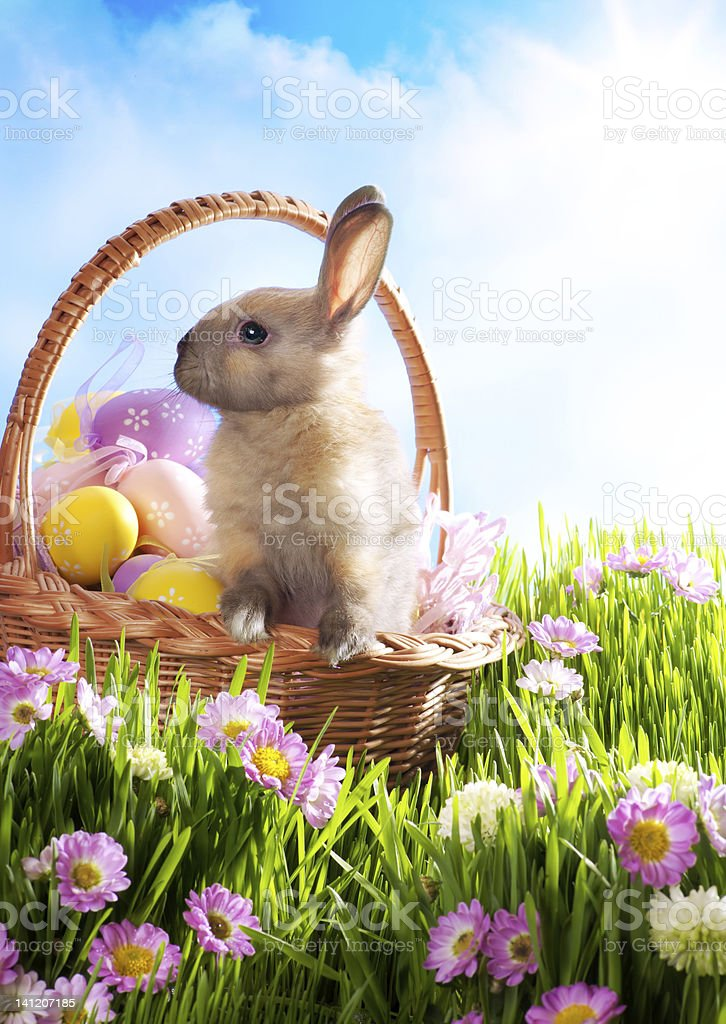 Easter basket with decorated eggs and baby bunny stock photo