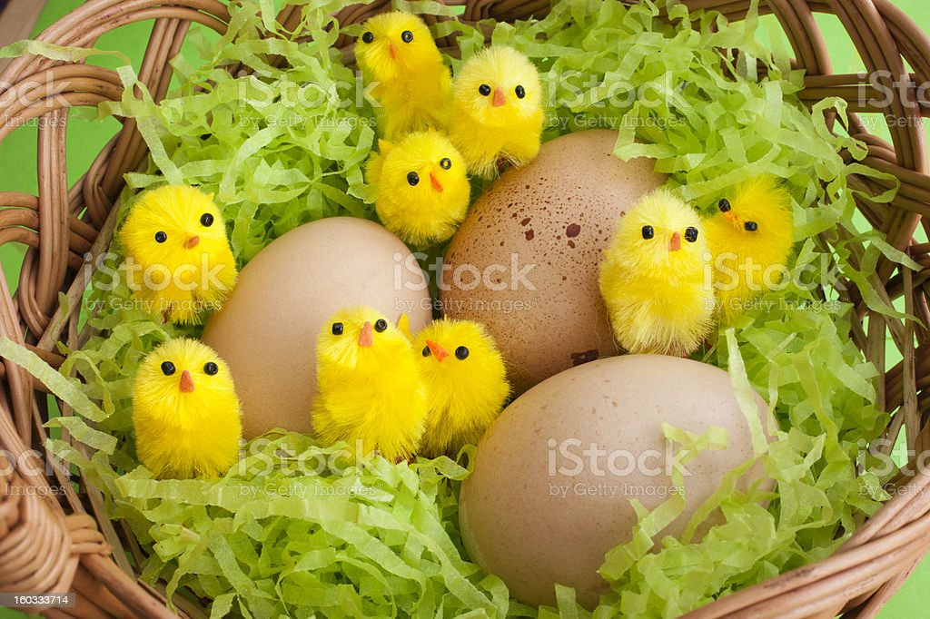 Easter basket yellow chicks speckled eggs royalty-free stock photo