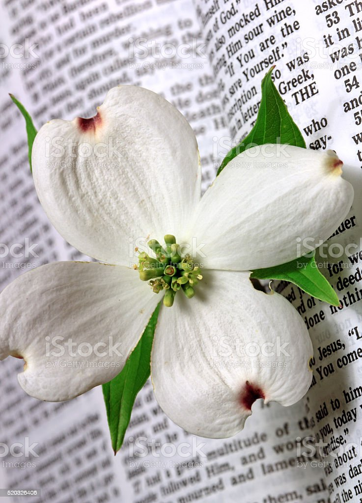 Easter Bible Scripture with a white Dogwood flower stock photo