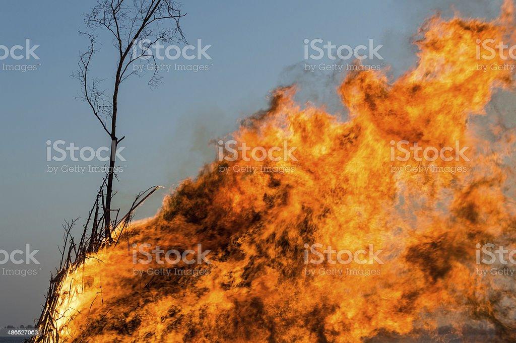 Easter bonfire stock photo
