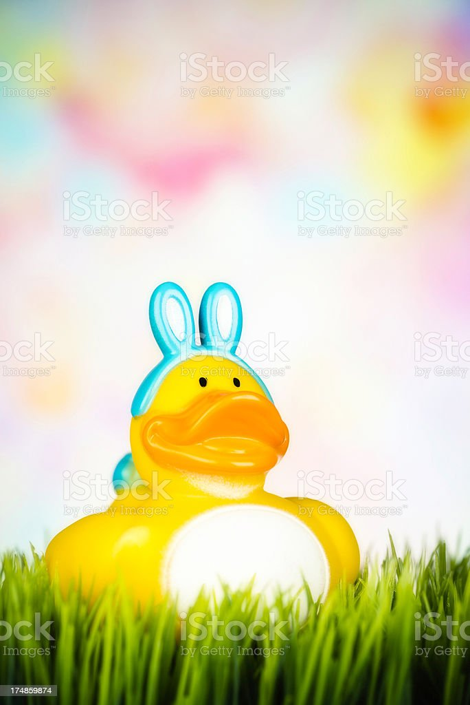 Easter Boy Ducky in Grass royalty-free stock photo