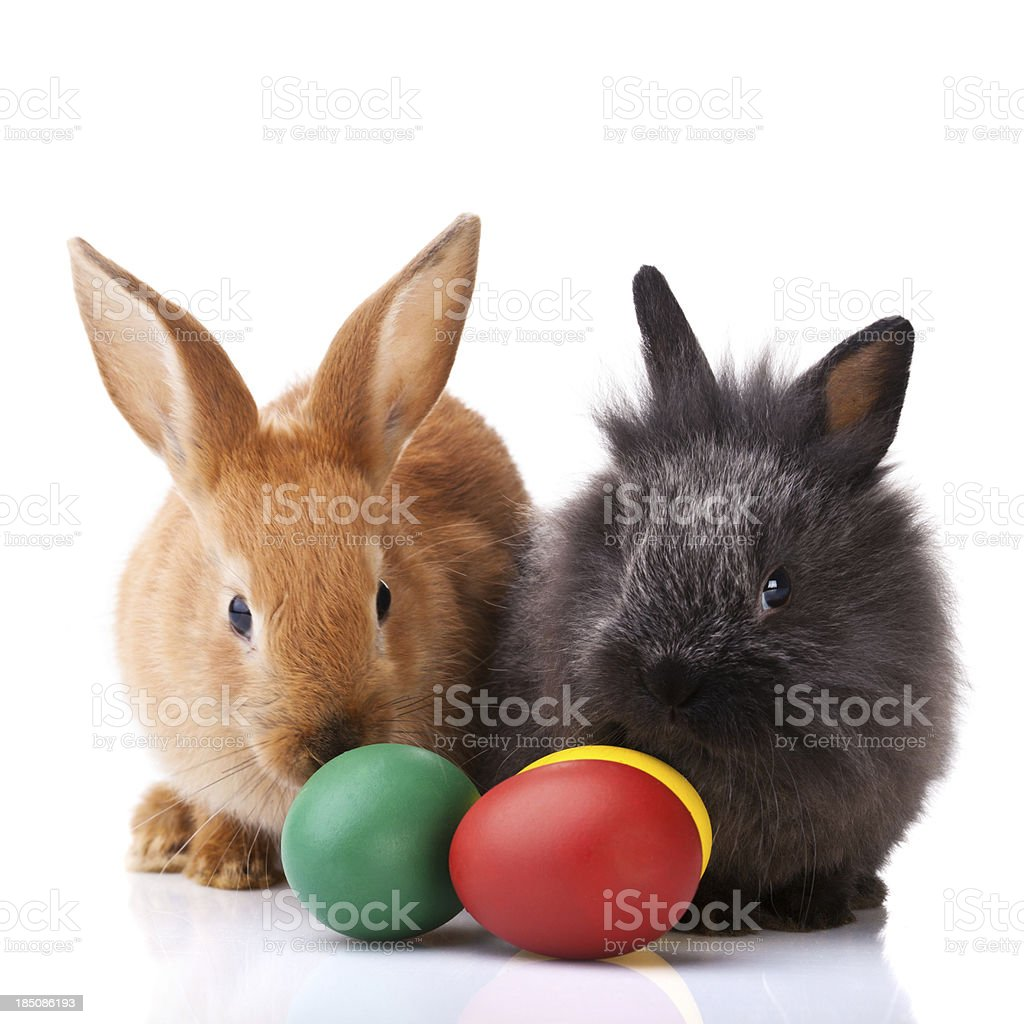 Easter bunnies royalty-free stock photo