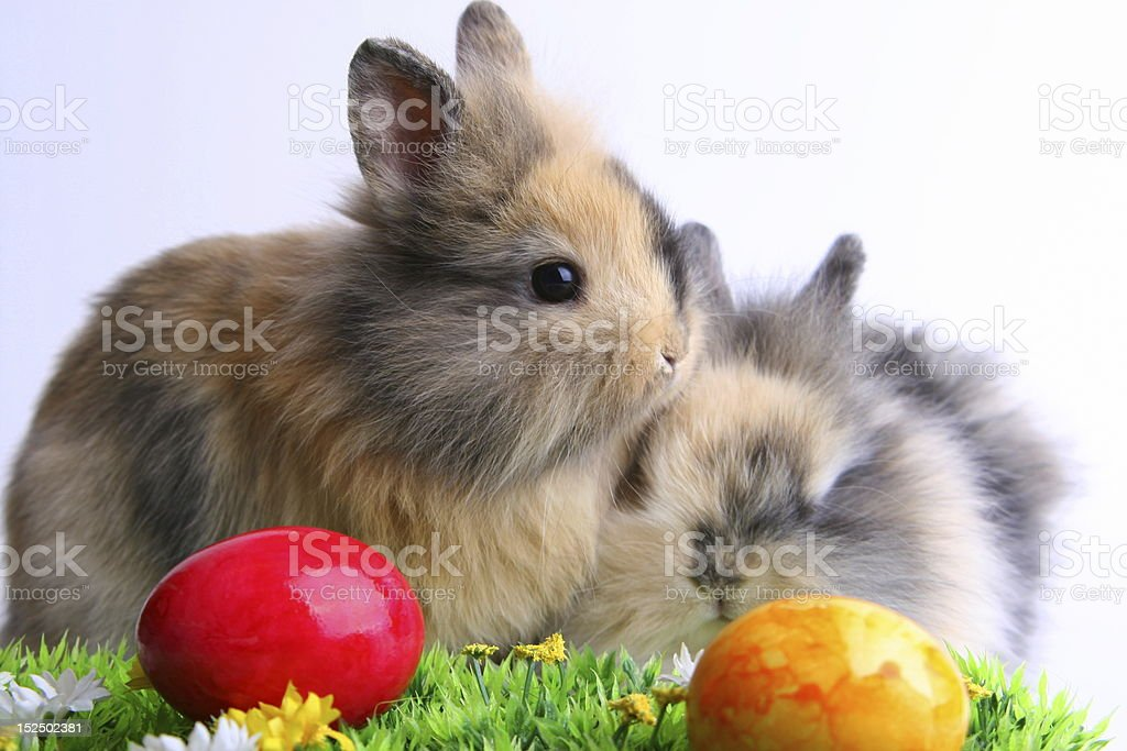 Easter bunnies with eggs stock photo