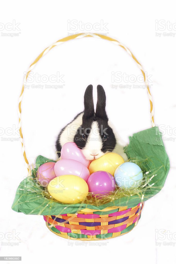 Easter Bunny 2 royalty-free stock photo