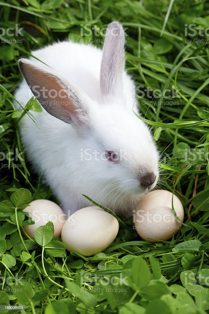 Easter Bunny & Eggs royalty-free stock photo