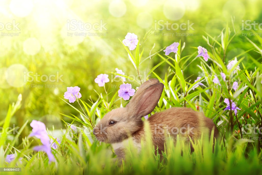 Easter bunny hiding under violet flower stock photo